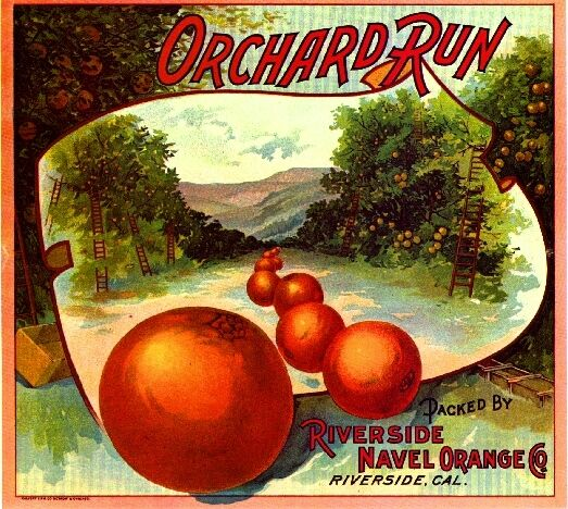 Riverside Orchard Run #1 Orange Citrus Fruit Crate Label Art Print