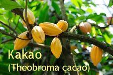 ***Kakaobutter, raffiniert, 200g (Theobroma cacao) für trockene/reife Haut!!