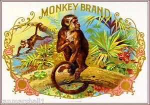 1900 Monkey Smoke Vintage Cigar Tobacco Box Crate Inner Label Print