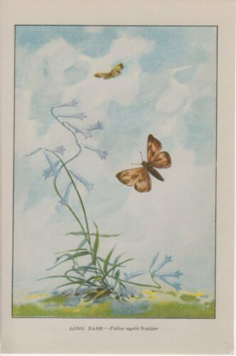 """1917 Vintage BUTTERFLIES /""""LONG DASH/"""" BUTTERFLY LOVELY COLOR Art Plate Lithograph"""