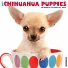 Just Chihuahua Puppies by Willow Creek Press