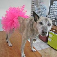 Dog Tutu Hot Pink With Hearts - Free Shipping