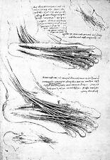 Leonardo Da Vinci Muscles of the foot  Anatomy Poster Print Art