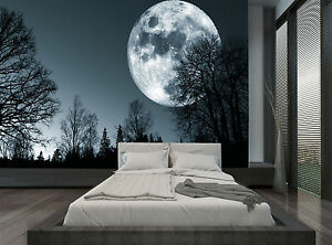 Image Is Loading Forest Night Trees Moon Dark Wall Mural Photo