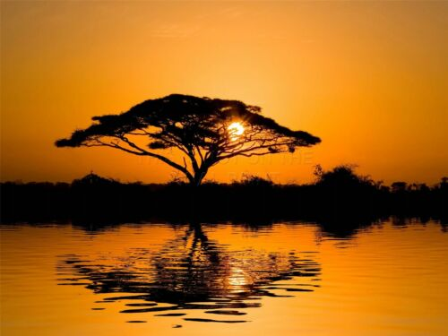 ART PRINT POSTER PHOTO LANDSCAPE ACACIA TREE SILHOUETTE SUNRISE DT LFMP0350