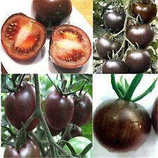 Rare Seed Tomato Black Cherry Vegetable Seed Tasty Russian Heirloom 20PC A