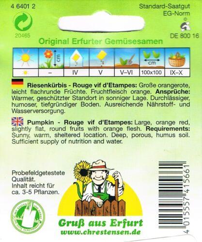 Riesenkürbis /'Rouge vif d´Etampes/' rot Kürbis Samen Gemüse 464012