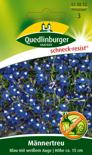 Männertreu Blau mit weißem Aug Quedlinburger