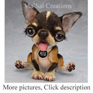 Ma-039-Sal-original-Dolly-Doggy-Smoot-Coat-Apple-Head-Black-Tan-Chihuahua-puppy