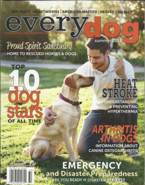Every Dog magazine Top 10 stars Arthritis Heat stroke Emergency and disasters