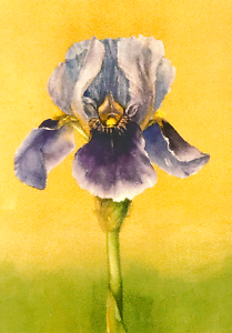 ACEO Print Bearded Iris Pale Purple Yellow Accents Flower