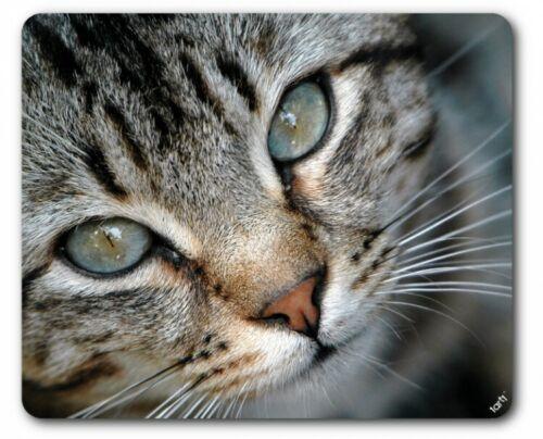 Katzen 23x19cm #89513 Augen Grau Getigertes Kätzchen Tier-Mauspad Mousepad