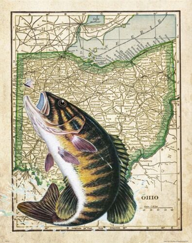 Smallmouth Bass Fishing Club Ohio State Map Art Print Decor Vintage Lures Gifts