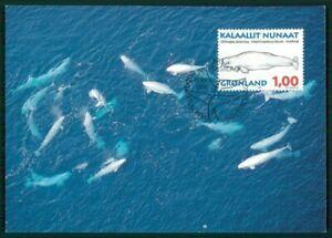 Consciencieux Le Groenland Mk 1996 Faune Baleine Baleines Choisis-en Whales Baleine Maximum Carte Mc Cm En74-afficher Le Titre D'origine Qualité Et Quantité AssuréE