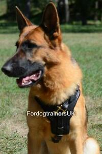 German Shepherd Harness for Dog Comfort and Style | GSD Harness, Padded Leather