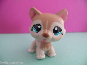 petshop chien husky roux creme / dark orange tan dog N° 1012