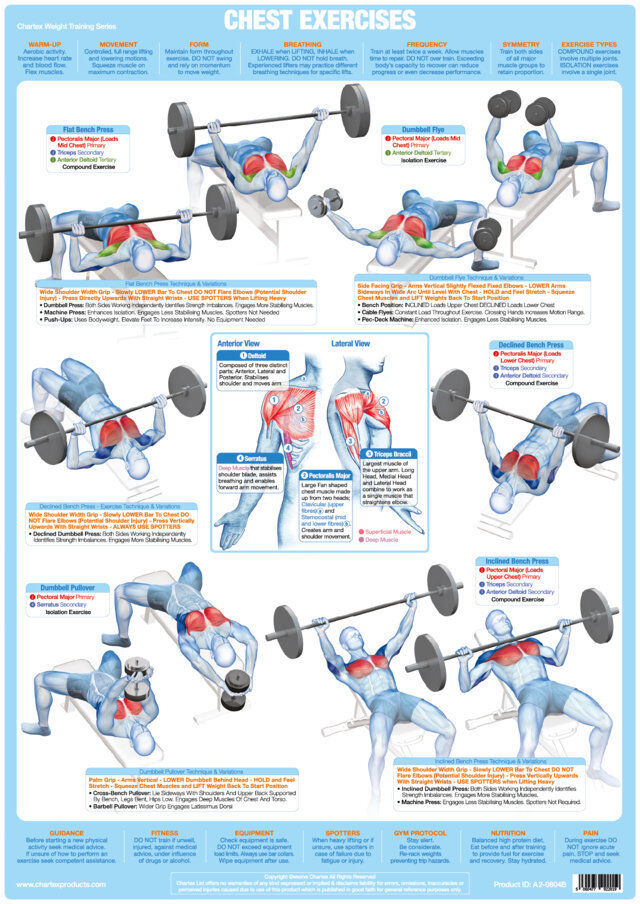 Chest Weight Training Poster Body Building Chart Pectorals Muscles Fitness