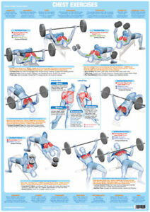 Details about Chest Muscles Weight Lifting and Body Building Poster  Exercise Training Chart