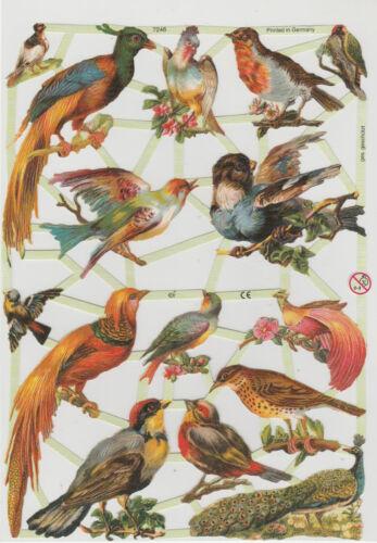 Chromo EF Découpis Oiseau 7246 Embossed Illustrations Bird