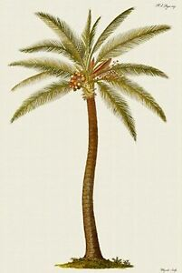 Coconut-Palm-Tree-counted-cross-stitch-pattern-282-Nature-Flowers-Floral-Chart