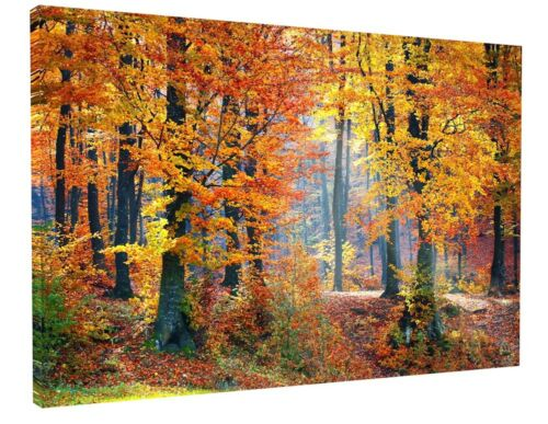 STUNNING AUTUMN WOODLAND CANVAS PICTURE PRINT WALL ART CHUNKY FRAME LARGE 2016-2