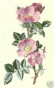 FAMILIAR-WILD-FLOWERS-by-F-E-Hulme-5-Old-Books-on-CD-Antiquarian-Book-Collection