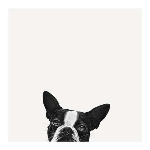 Loyalty  Jon Bertelli Boston Terrier Animals Dogs Humor Print Poster 18x18