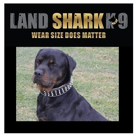 XX-Large schwarz & Natural Suede Leather Studded Dog Dog Dog Collar (Staffy) 272931