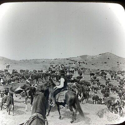 Vtg Magic Lantern Glass Slide Photo Keystone Paloduro Ranch Texas Cattle Drive