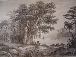 Brasil-Brazil-Lake-on-Les-Bords-de-L-039-Amazon-Engraving-on-Steel-of-1838