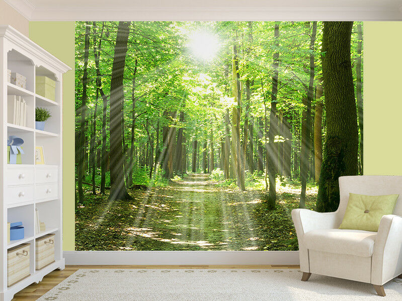 Forest Sunlight And Shadows Foto Wandtapete Wandgemälde (8176166) Natur