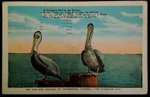 St Petersburg Postal De La Florida De Colección Temprano