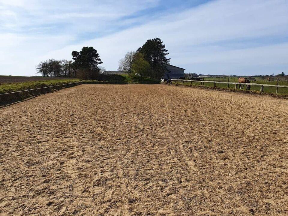 Ledig ponyboks i hyggelig, idyllisk hestekollektiv
