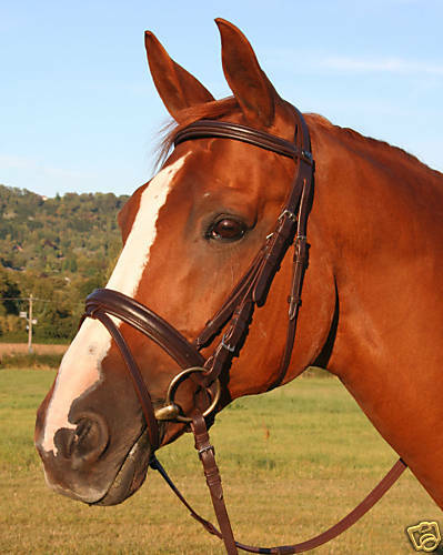 KF Equine Havana braun English leather crank flash padded poll bridle cob Größe
