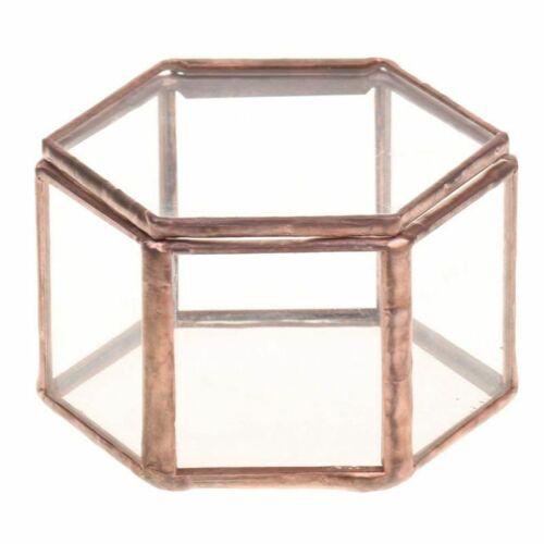 Geometrisches Glas Terrarium Kasten Schmuckschatulle Glas Sukkulente Pflanz V3A6