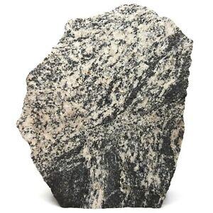 Gneiss Migmatite Metamorphic Rock - Australia - Lapidary ...