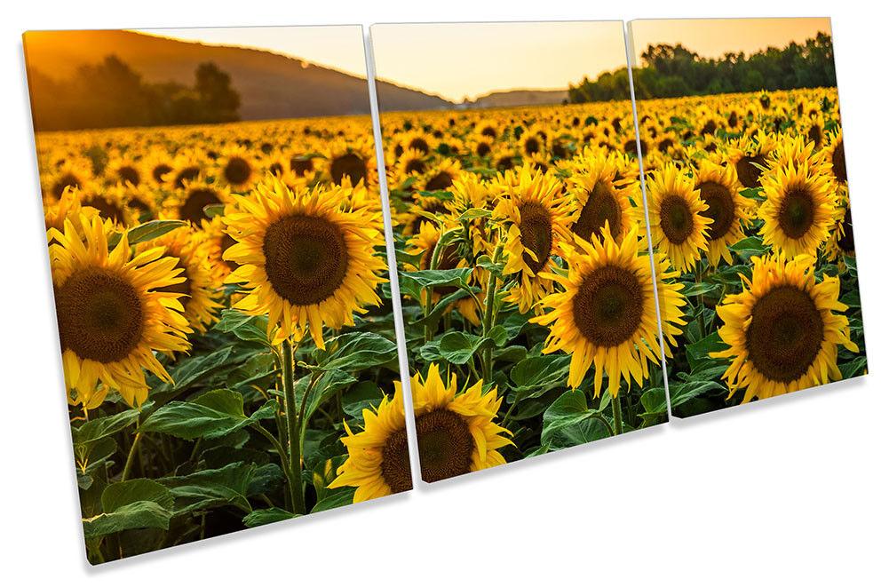Campo de girasol puesta de pared sol LONA pared de arte Foto impresión de agudos 5e777a