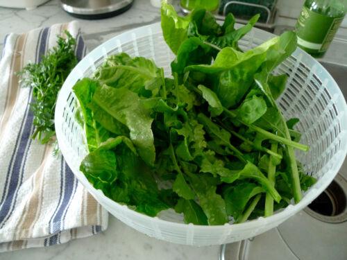 Rukola-salatrauke 200 graines rucola-Eruca sativa