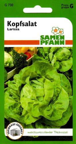 zeitiges Frühjahr Kopfsalat Samen Winter Treibsalat Larissa Anbauzeit Herbst