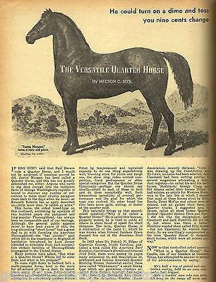 A Quarterhorse Named Peso