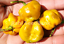 Adjoema-Mustard-Chilli-A-Highly-Recommend-Chilli-Variety-OZ-Grown-Seeds
