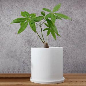 Details About Large White Plant Pot Modern Planter Ceramic Indoor Outdoor Flower Usa