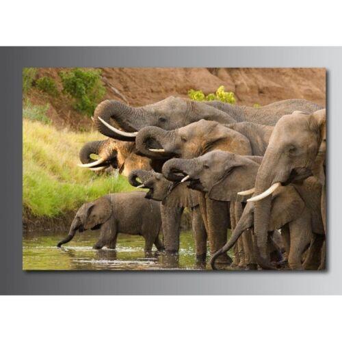 Tableaux toile déco rectangle éléphant  54180163
