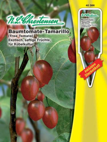 Baumtomate Tamarillo Kübelkultur Balkon Tomaten Samen 40386