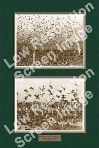 "24x36/"" Claypool Ducks Wild Acres Reservior Print Sepia Version"