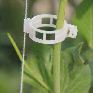 100 Stück Pflanzenclips Tomatenclips Pflanzen Unterstützungen Zubehör DE
