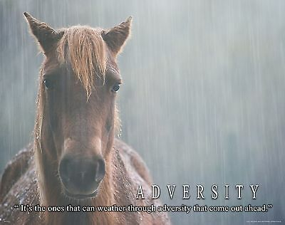 Horse Motivational Poster Art Western Decor Cowgirl Rodeo Saddle Spurs MVP411