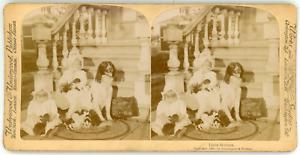 Stereo-Underwood-amp-Underwood-Publishers-Strohmeyer-amp-Wyman-Little-Mothers-Vin