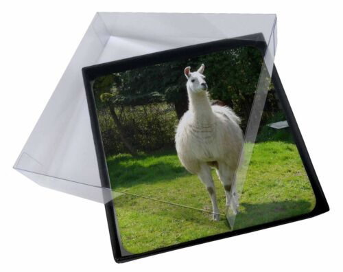 4x Llama Picture Table Coasters Set in Gift Box, AL3C