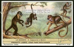 White-Faces-Capuchin-Samiri-Monkey-Primate-Ape-60-y-o-Trade-Ad-Card